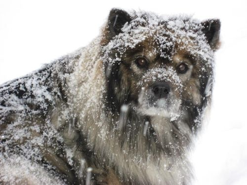 from A Whole Lotta Dogs!!!!: Lotta Dogs, Snow Fun