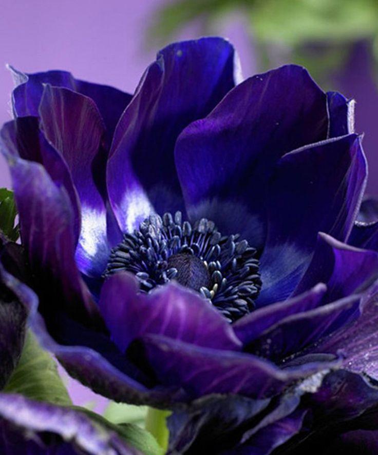 картинки с цветами фиолетово-синего удалось пообщаться корчагиным