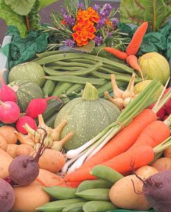 Stoffwechsel anregen mit den richtigen Lebensmittel