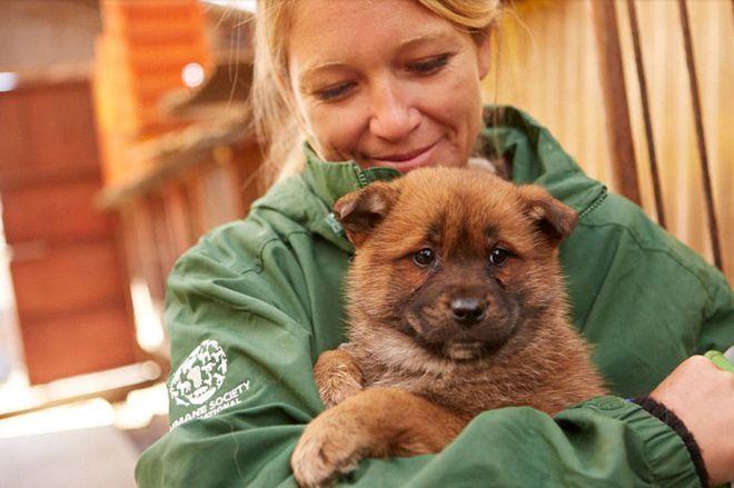 Lola Webber az egyik megmentett kiskutyával  #kutya #dog #korea #állatmentés #kutyabaráthelyek