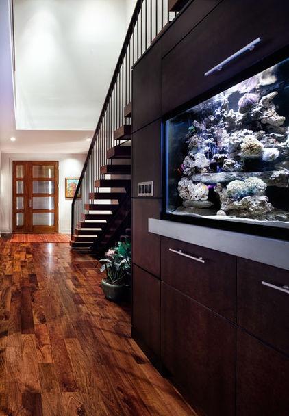 Saltwater fish tank under stairs Good idea