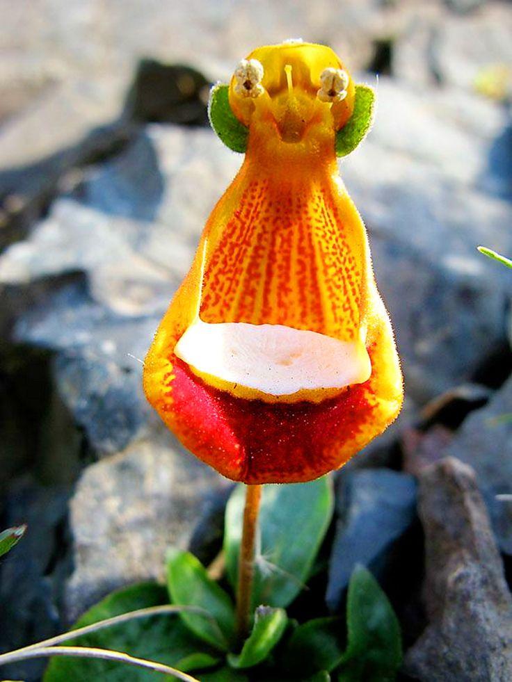 стиле фото самые удивительные цветы мира пугайтесь