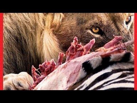 Najgroźniejsze zwierzęta świata - Pustynie i równiny HD(Dokumentalne pl)(lektor pl) - YouTube