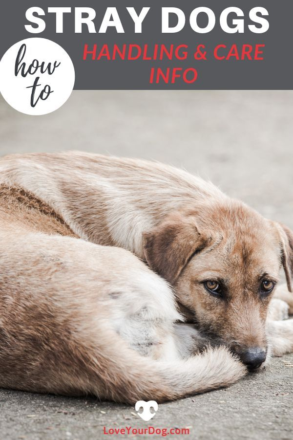 Stray Dogs How To Help And Handle A Street Canine Stray Dog