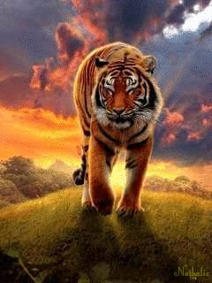 Beautiful Animated Girl Wallpapers Animated Tiger Screensavers Bing Images Tigers
