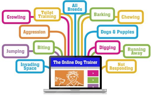 The Online Dog Trainer from Doggy Dan - Proven advice for the most common behavioral problems