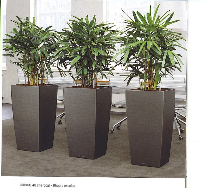 41 best images about office plants on pinterest jazz for Modern indoor plants