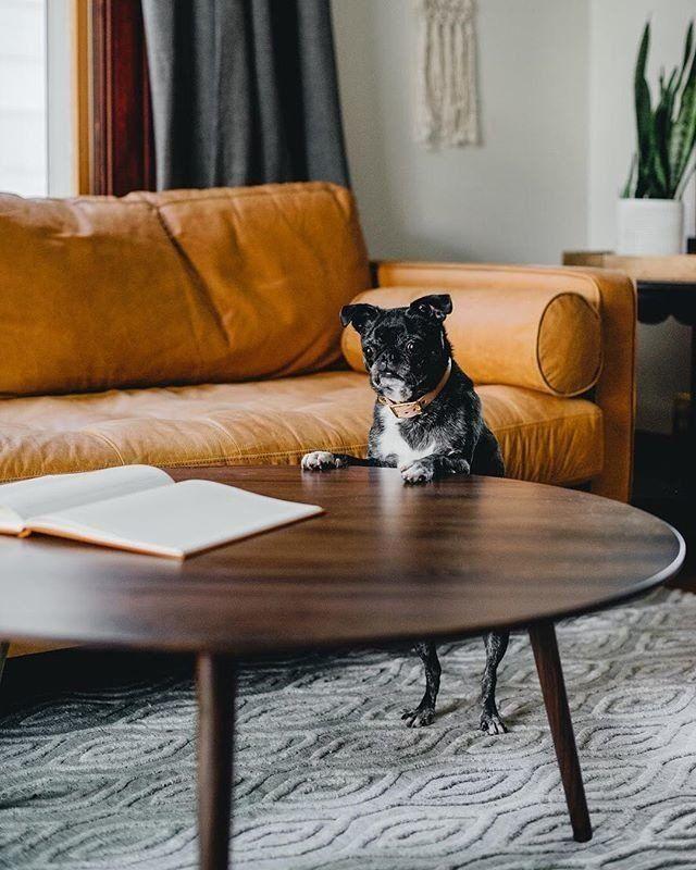Amoeba Wild Walnut Coffee Table Coffee Table Dog Friendly