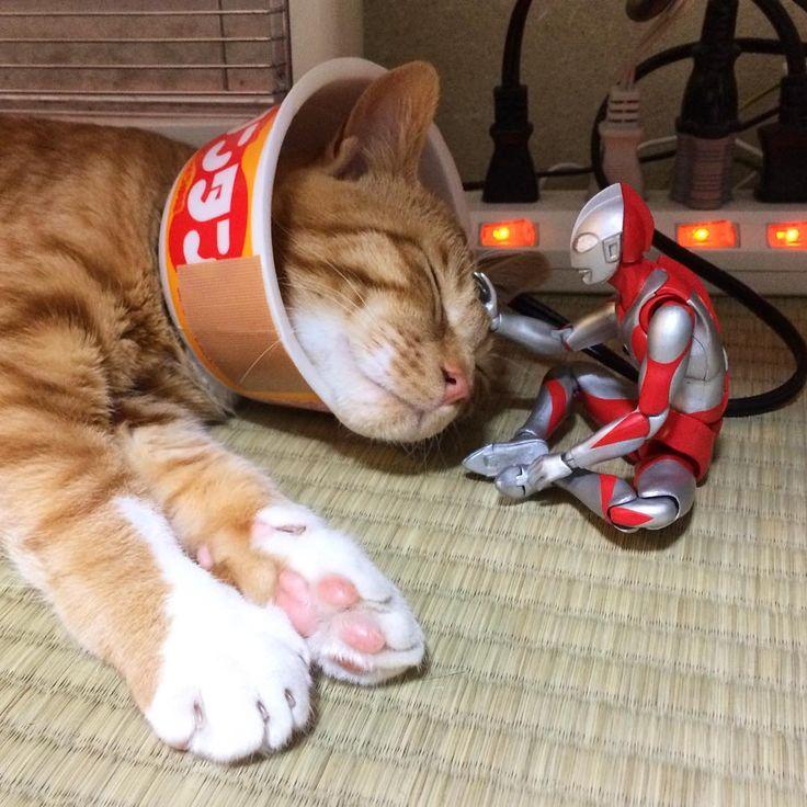 コマも本日グッバイタマタマしてきました。 やはり傷口を舐めてしまうので、流行りのカップ容器のエリザベスカラーを装着。ニャンタン #猫 #茶トラ #cat