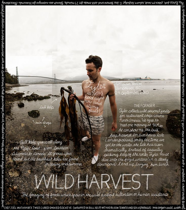 Wild Harvest: Foraging for bull kelp in the Vancouver Harbor.