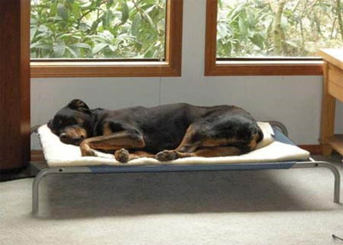 40 Best Unique Raised Dog Bed Images On Pinterest Pet