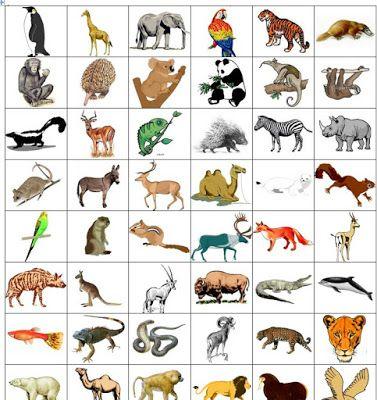 kartice z živalmi