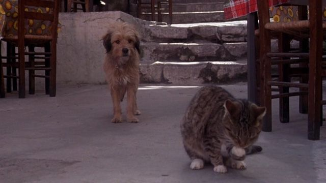 A Greek tabby cat is not happy with Benji sneaks up from behind and makes it known in For the Love of Benji (1977).