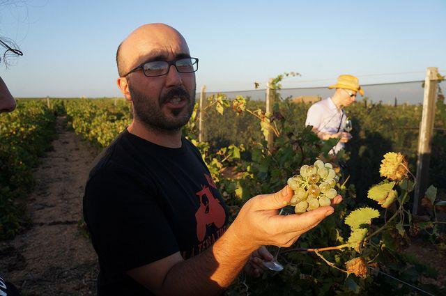 Vignammare, Nino Barraco vineyard   Flickr - Photo Sharing! #westsicilywine