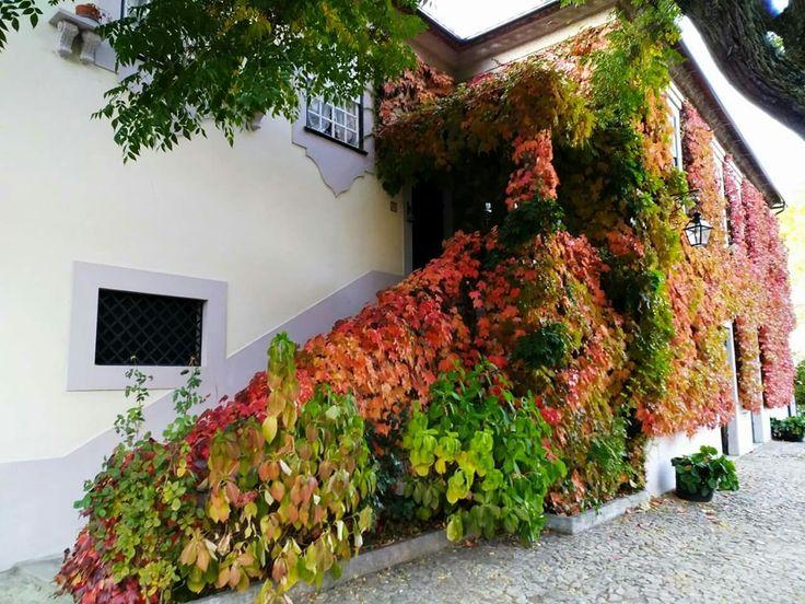 Quinta da Casa Amarela Cambres