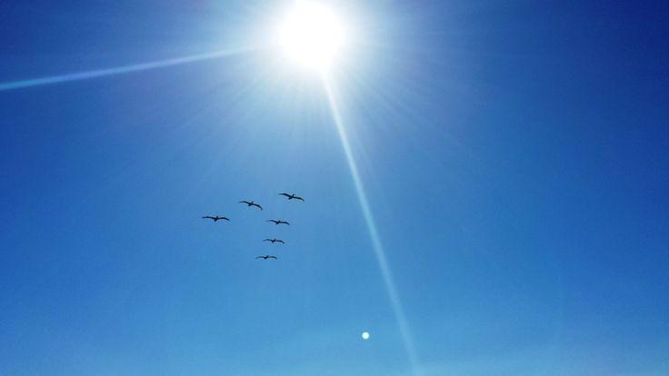...o mister pelican,how high you soar..please take me for a ride...dania beach, florida 2014