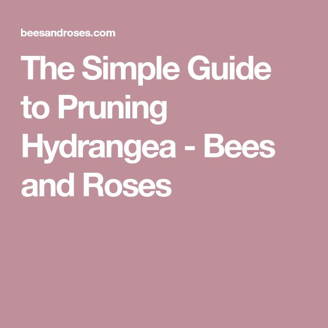 The Simple Guide to Pruning Hydrangea - Bees and Roses