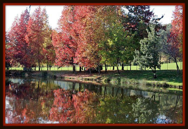 Fall at Ironstone Vineyards, Murphys, CA