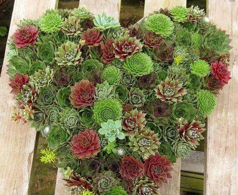 Arreglos de navidad con suculentas jardines pinterest for Cactus de navidad