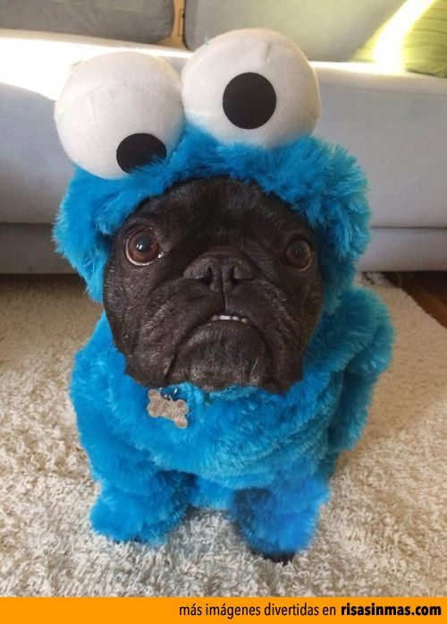 Resultado de imagen de disfraces de perro