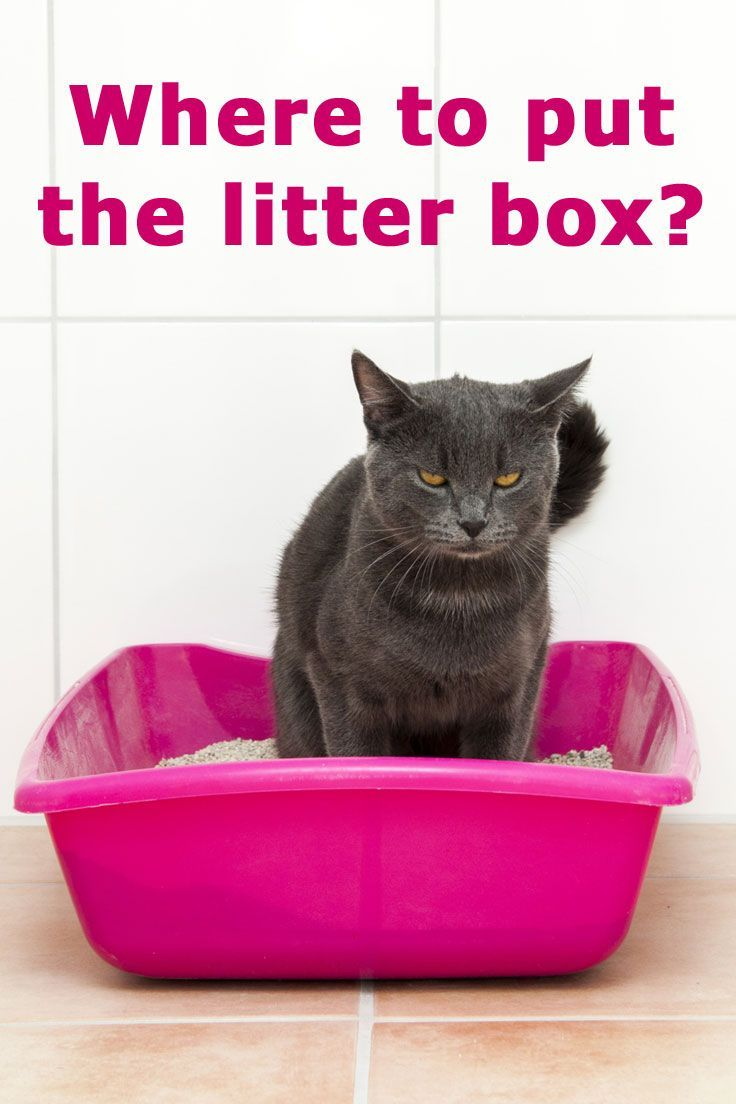 Where To Put The Litter Box The Complete Guide For Cat Owners Cathealthpetproducts Cat Training Litter Box Cat Care Kitten Care