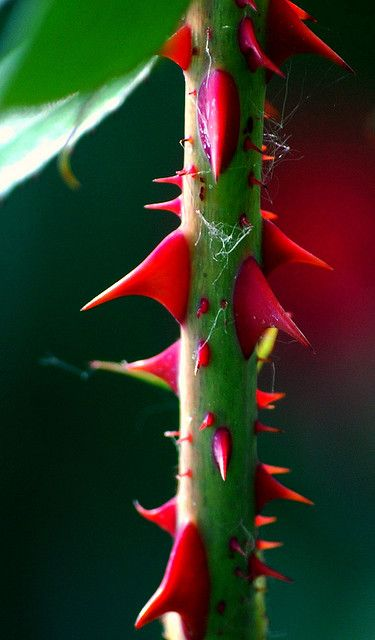 """""""When it hurts you know it's real""""    Rose Thorns (Macro) - Russell Tomlin"""