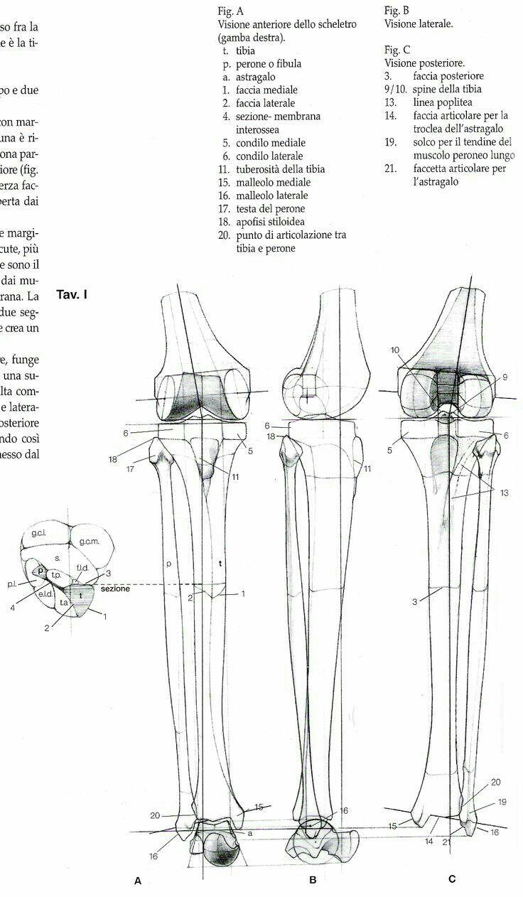 40 besten BONES 007 Bilder auf Pinterest | Knochen, Menschliche ...