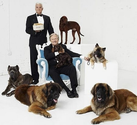 Thanksgiving Day Dog Show