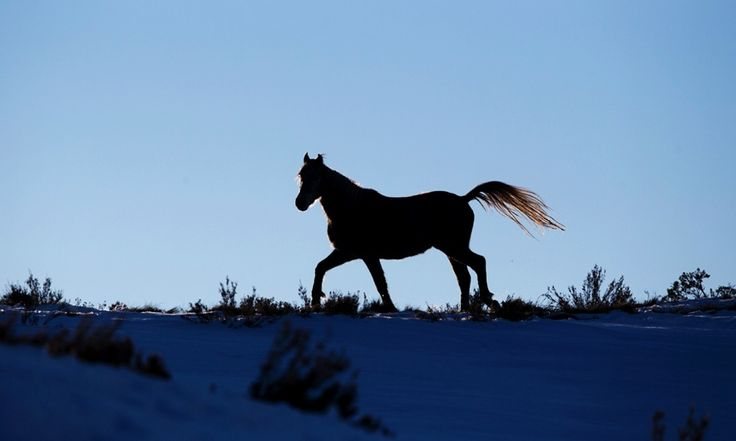 The brumby, at home in Australia's high country – in pictures