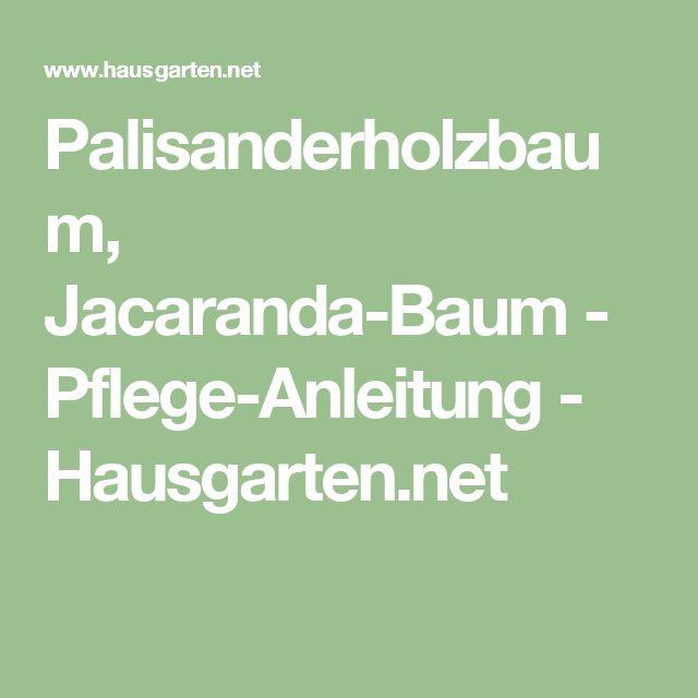 Palisanderholzbaum, Jacaranda-Baum - Pflege-Anleitung - Hausgarten.net