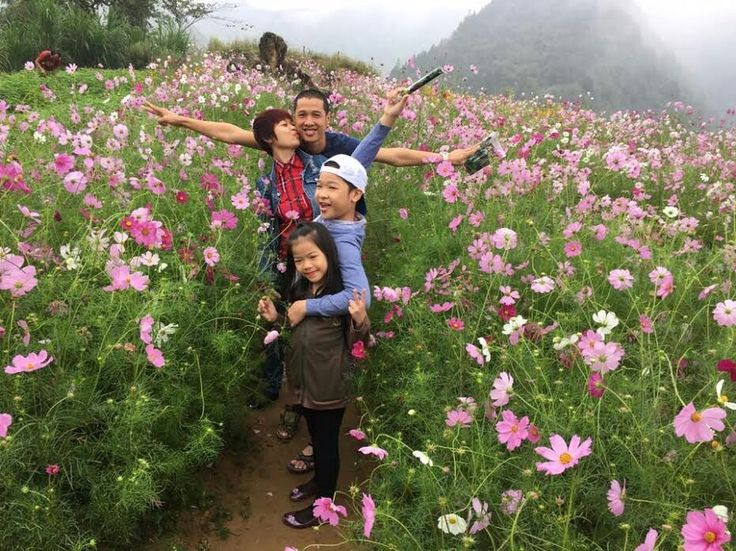Enjoying the cosmos flower fields in Vietnam
