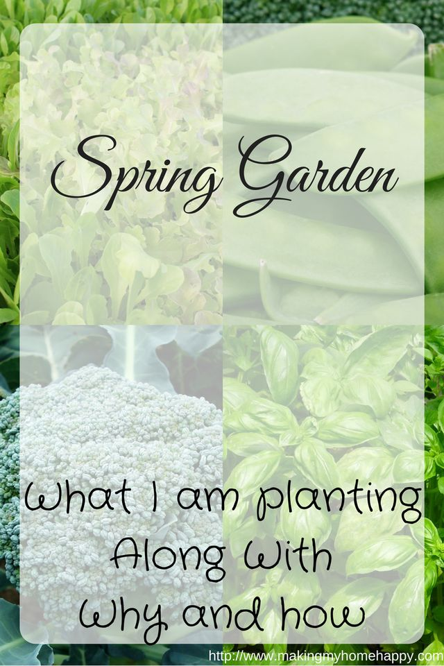 I love gardening. I've been doing it for the last 4 years. It's definitely a passion of mine. My container garden is constantly rotating, and it looks fantastic! Here are my plans for this year. Let it help and hopefully inspire you!