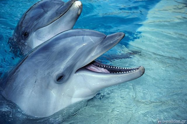 Συγκλονιστικό: Δελφίνια έβγαλαν εικόνα της Παναγίας στην ακτή – Δείτε εικόνες