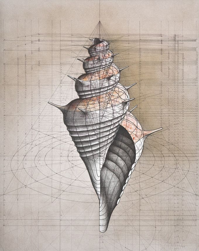 Fibonacci Sequence ShellA Coloring Book With A Collection Of Rafael Araujos Hand Drawn Golden Ratio Illustrations To Reconnect Yourself And Nature