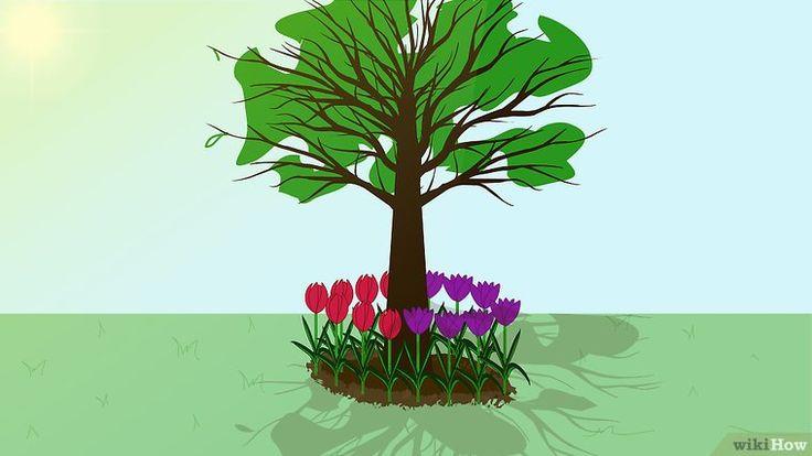 Cómo plantar y cuidar tulipanes: 15 pasos (con fotos)