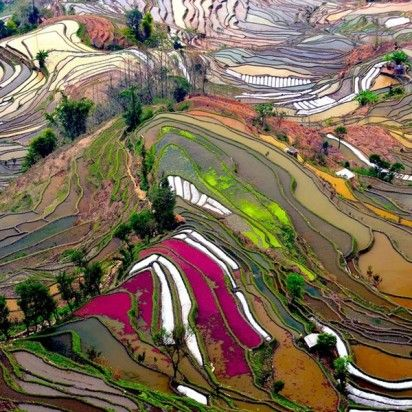 a rice field in china