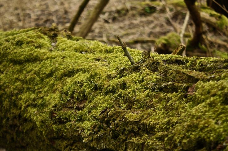 Mossy trees - Shot on a Canon EOS 1000D, Av, ISO 400, shutter speed 1/320, f/5.6