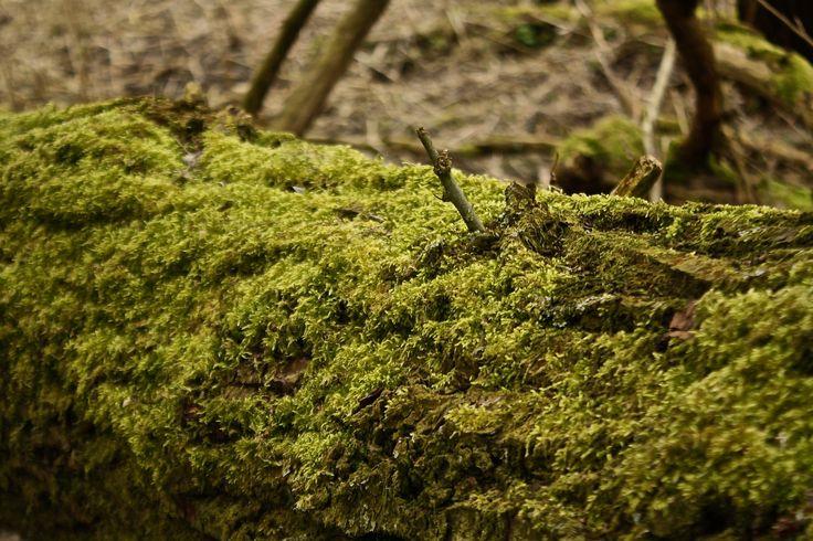 Mossy trees - Shot on a Canon EOS 1000D, Av, ISO 400, shutter speed 1/320, f/5.6