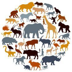 silhouette d'animaux d'Afrique profils Stock Vecteur Libres de Droits 9993628…