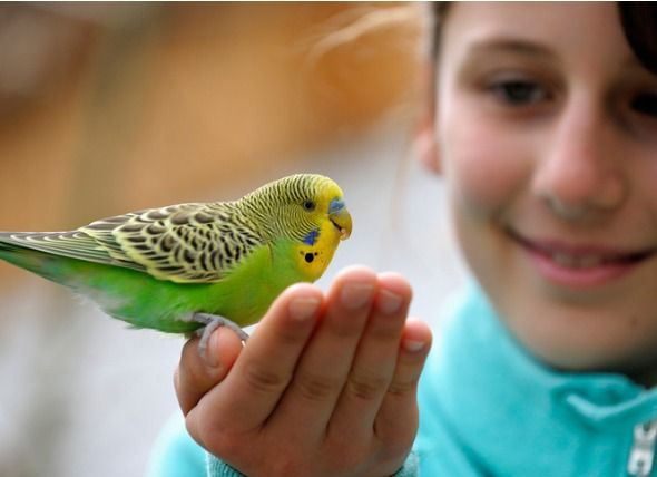 These Are The Best Pets For Kids At Each Age Best Pets For Kids