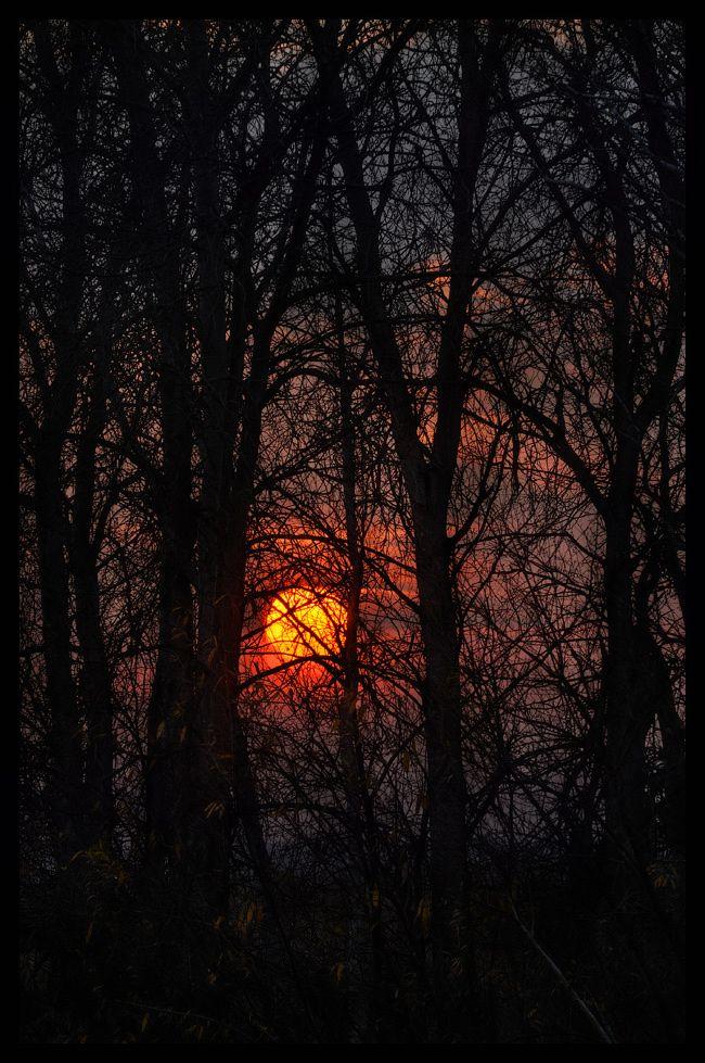 NighttimeHarvest Moon, God Creations, Halloween Night, Magic Forests, Beautiful Photographers, Autumn Sunsets, Sun Moon Stars, Beautiful Sunsets, The Moon