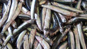 Recept: ceviche de anchoveta