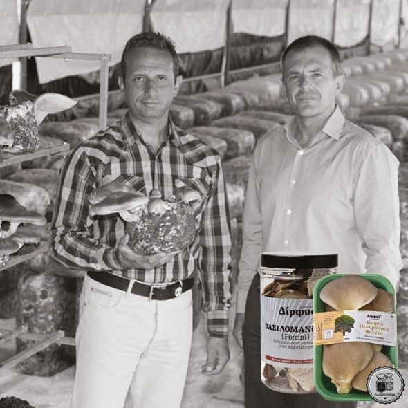 Τα μανιτάρια της Δίρφυς Γνωρίστε την εταιρεία μας έμαθε πριν από περίπου δέκα χρόνια τα μανιτάρια πλευρώτους, και όλα τα άλλα γήινα προϊόντα τους. Από τη Μερόπη Κοκκίνη...