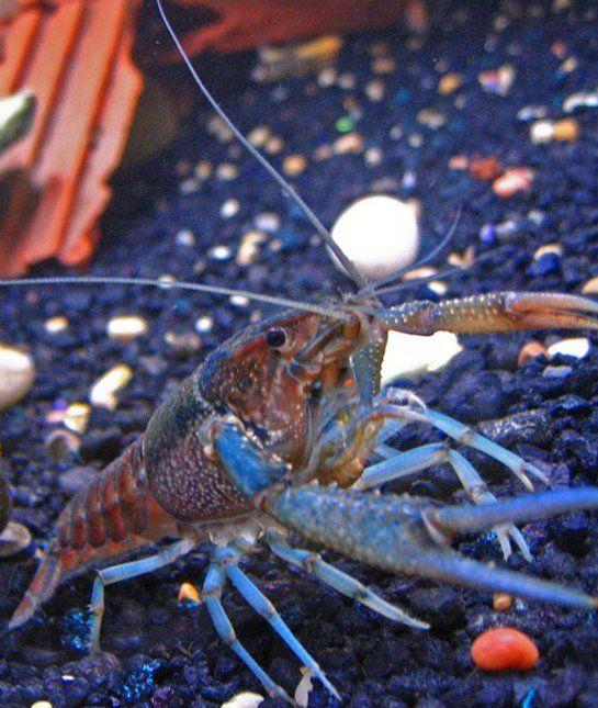 10 of the Best Non-Fish Aquarium Pets - Loving Pets Blog