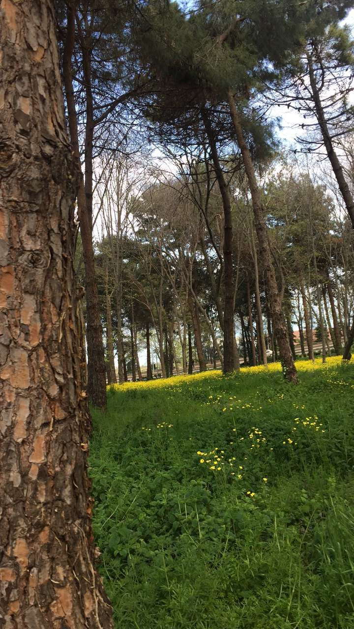 KTÜ #tree #natural #green #pretty #phone #pic