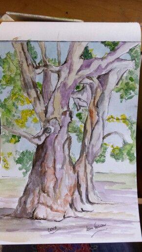 A knarly ole gum tree in Lota - watercolour & pen 14x21cm