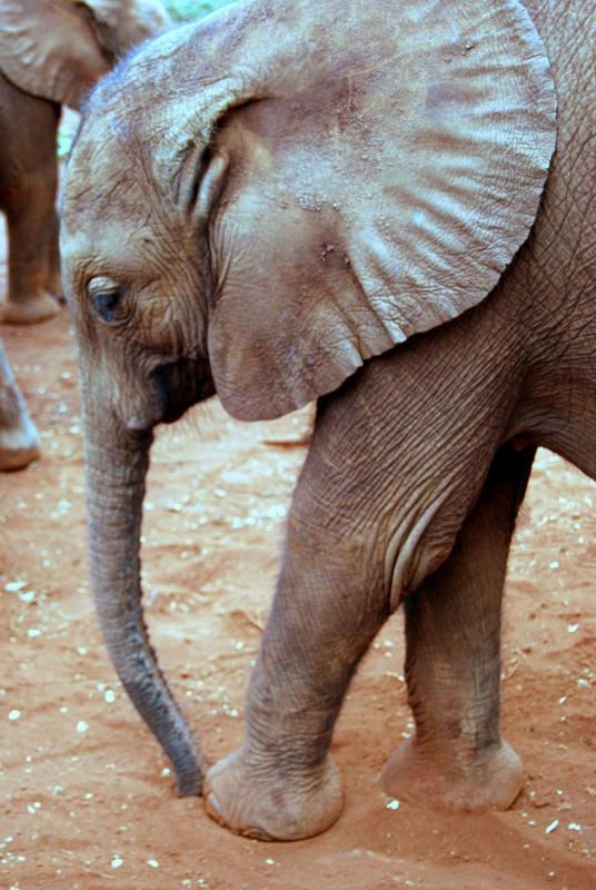 Elephant nursery in Kenya   THE MOSAIC FINGERPRINT