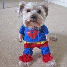 Superhero - small size $13.99