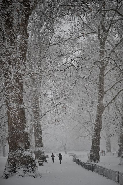 St James Park in the snow, London - Search for the best hotel rates among 100's of hotels at  http://LowestTripRates.com
