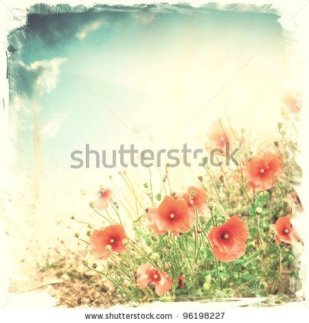 Red Poppy Flowers ; Vintage Background ; Illustration - 96198227 : Shutterstock